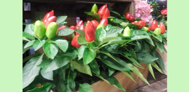 Impressum dornr schen for Pflanzen laden berlin